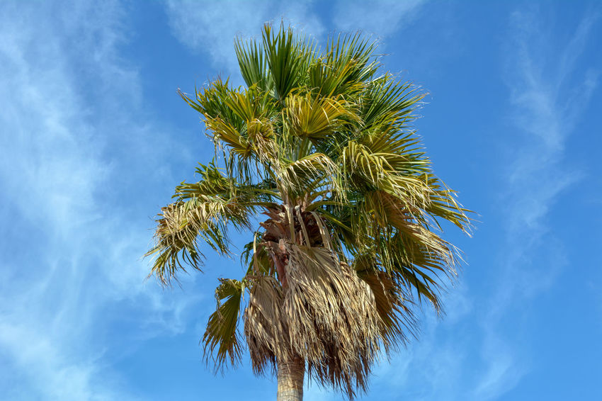 Captured by Beautiful Trees And Flowers Are In The Garden Beauty In Nature Blue Branch Close-up Cloud - Sky Day Growth Low Angle View Nature No People Outdoors Palm Tree Sky Tree