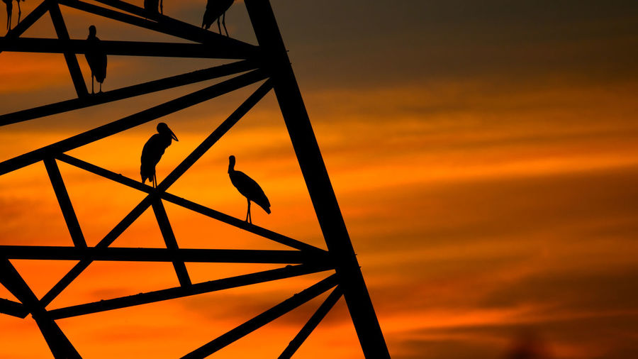 Low angle view of bird perching on orange sky