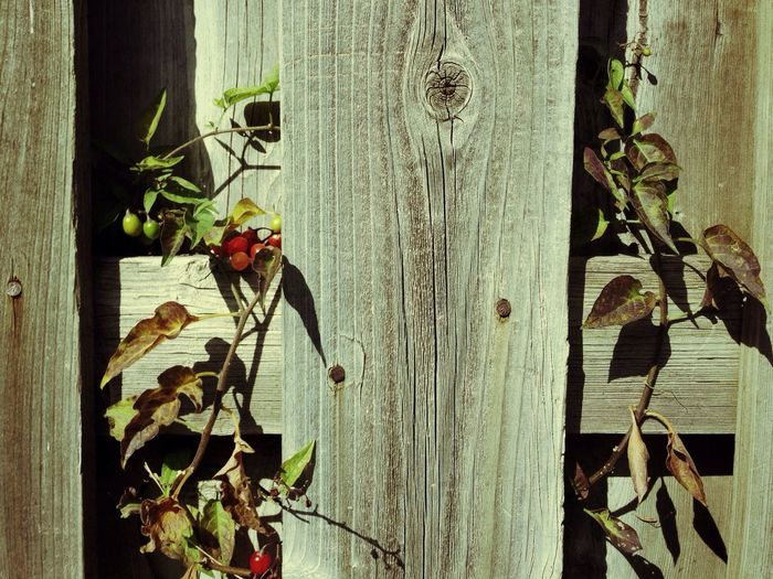 TGI Fence Post