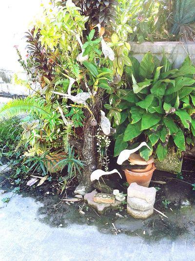 Plants Decorate Egret Relaxing Pot Tangle Garden