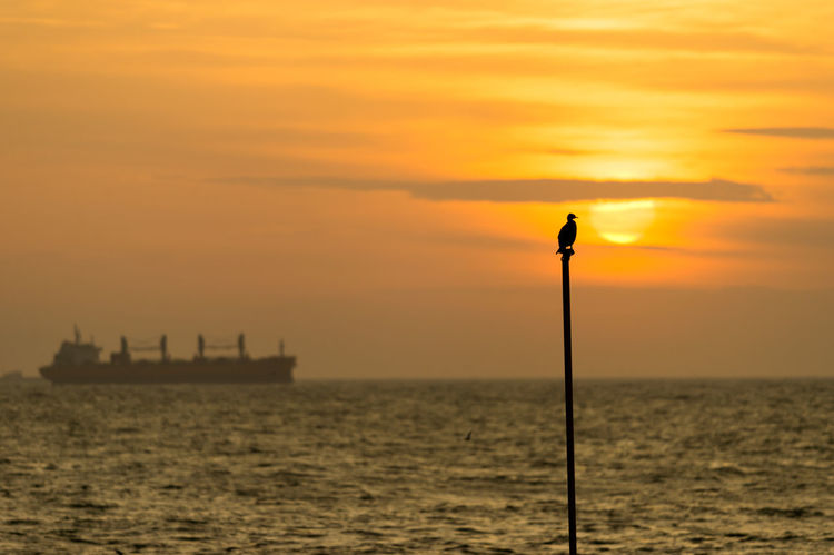 Sunset Watching I: Seagull enjoying sunset Bird Photography Cargo Ship Istanbul Orange Tranquility Beauty In Nature Bird Horizon Over Water Istanbul Turkey Nature No People Orange Color Outdoors Scenics Sea Seagull Seascape Ship Silhouette Sky Sun Sunset Tranquil Scene Water Yellow Shades Of Winter