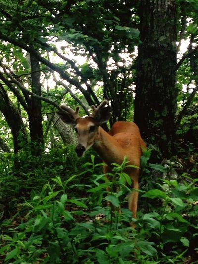 Deer Nature Hiking Trail