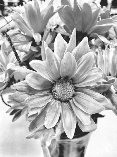 Blackandwhite Sunflowers Procamera8 Snapseed