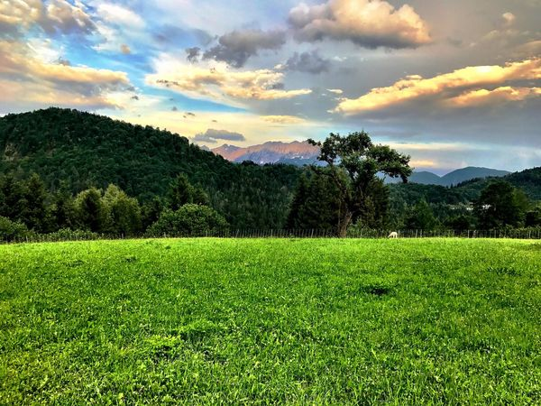 Trojer #kiefersfelden #trojer Beauty In Nature Cloud - Sky Day Field Freshness Grass Green Color Growth Landscape Mountain Nature No People Outdoors Scenics Sky Tranquil Scene Tranquility Tree Perspectives On Nature EyeEmNewHere