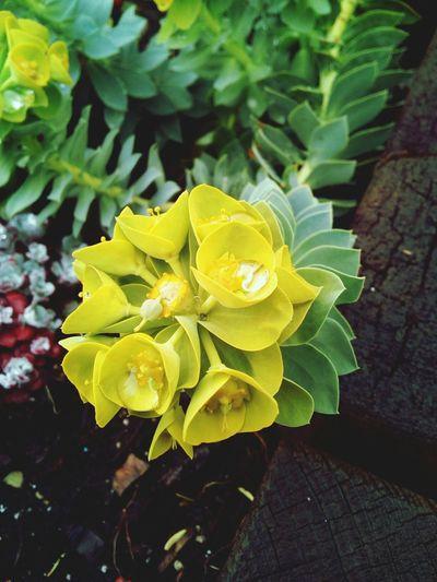 L'homme est la fleur de la Terre Fleurs Jaune🌻 Vert Goutte D'eau Citation☁💭