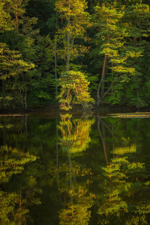 Trees are reflected in the water late summer autumn Natural Spectacle Evening Light Trees Water Reflections Beauty In Nature Reflections In The Water Romantic Sky Scenics - Nature