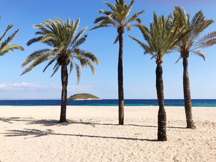 Magaluf Beach (Mallorca) Mallorca Lifeisabeach Summer Summertime Lifeisabeach Magaluf Beach Beach Sea Land Water Tree Sky Palm Tree Horizon Day Horizon Over Water Sunlight No People Sand Nature Beauty In Nature Plant Tropical Climate