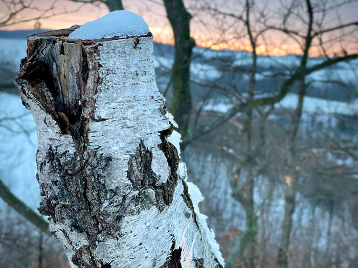 Close-up of frozen tree on wooden post