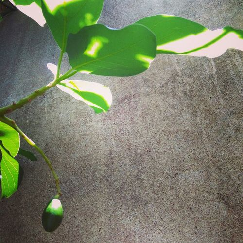 RePicture Growth Avocado Inmygarden New Life Light And Shadow Inbetweeners