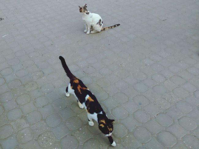 кошки египет