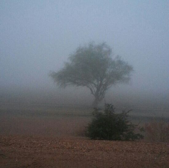 A foggy Sunday morning...no retouching here!
