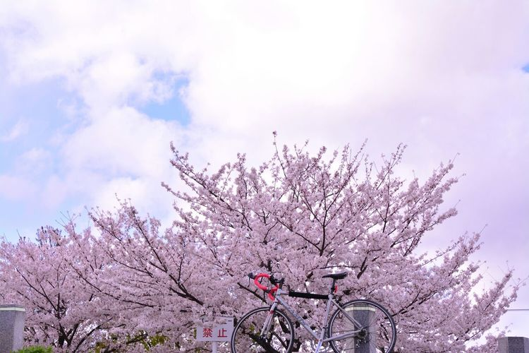 Cycling Roadbike Spring Flowers Sky And Clouds