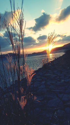 Reeds Flame Grass South Korea Yellow Sea Sunset Kanghwado 화도 강화도 Samsung Galaxy S6