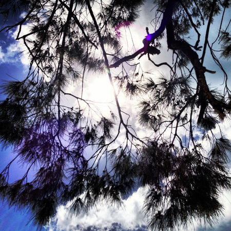 Ile Des Pins Leaf Noumea Nouvelle Calédonie Palm Tree Plant Tree Tree Trunk Tropical Climate