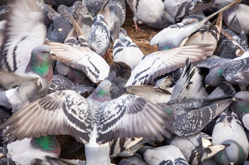 High angle view of pigeons