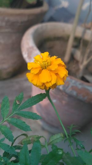Flowers Flower Nature Yellow Outdoors Beauty In Nature