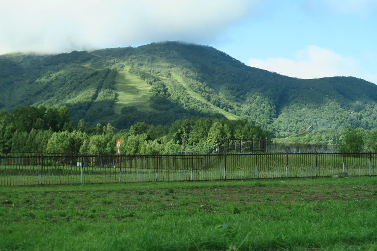 niseko hokkaido japan Green Color Hokkaido Niseko Road Tree Barrier Beauty In Nature Boundary Cloud - Sky Cloud And Sky Day Environment Field Grass Green Color Land Landscape Leaf Mountain Nature No People Outdoors Plant Scenics - Nature Sky Tranquil Scene Tranquility Tree EyeEmNewHere Capture Tomorrow Moments Of Happiness It's About The Journey 2018 In One Photograph