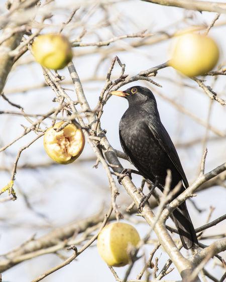 Bird perching on tree