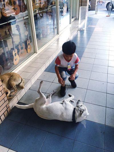 經過的瞬間 Moments Afternoon Dogs Boy Sweetheart Cute Stray Dogs The View And The Spirit Of Taiwan 台灣景 台灣情