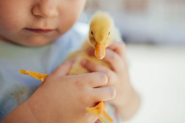 Close-up of boy holding ice cream