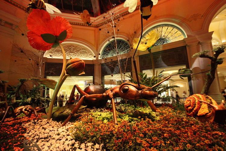 EyeEmNewHere EyeEm Gallery Eye Em Travel Las Vegas Bellagio Hotel Ants Flower Travel Destination Flowering Plant Indoors