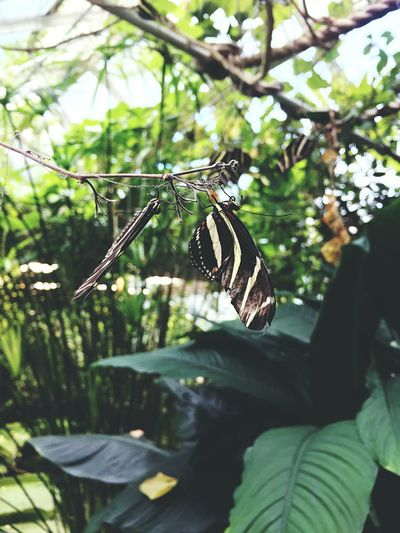 Butterfly in Oslo Botanical Garden. Insect Butterfly - Insect Plant Green Nature First Eyeem Photo