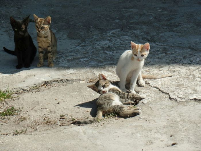 Kittens playing in the sun, Thasos Greece Hanging Out Check This Out Hello World Cheese! Hi! Enjoying Life Taking Photos Cats Enjoying The View Relaxing Pet Portraits