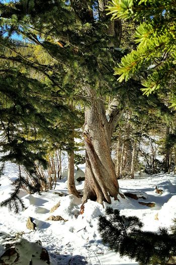 Beauty and Inspiration surrounds you when you are in Colorado! Love this state! Blue White Green Wilderness Vacation Environment Color Scenic Mountains Rocky Mountain National Park Nature Bear Lake Winter Snow Tree Sunny Colorado Scenery Cold Outside Outdoors Perspective