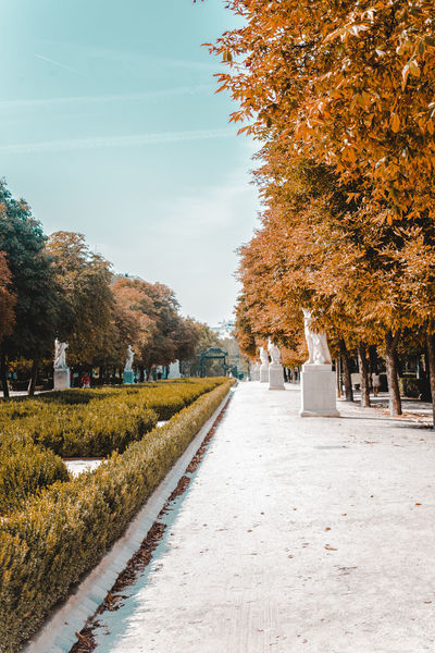 Views of El Retiro park in the center of Madrid, capital of Spain during autumn / fall Autumn Day Autumn Colors Autumn Leaves Blue Skies City Center City Centre City Park Fall Colors Madrid SPAIN A El Retiro Fall Fall Colours Fall Leaves Leisure Activity Retiro Spaın Walk In The Park