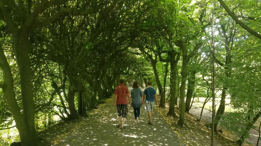 Park Sunny Green Color Family Stroll Tunnel Nature Tree Togetherness Friendship Full Length Branch Standing Tree Trunk Tree Canopy  Walking Pathway Treelined