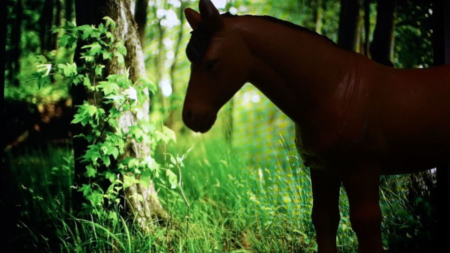 Nature Photography Feel The Nature Horse Photography