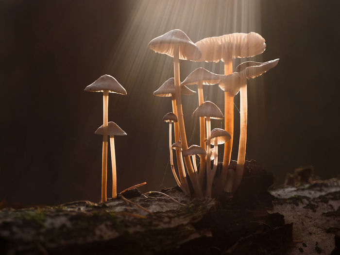 Pilze 🌾 Sunlight White Caps Beauty In Nature Bright And Dark Dark Background Forest Fragility Fungus Growth Mushroom Nature No People Outdoors Selective Focus Stem Sun Sunbeams Sunlight And Shadow Toadstool Trunk Tree