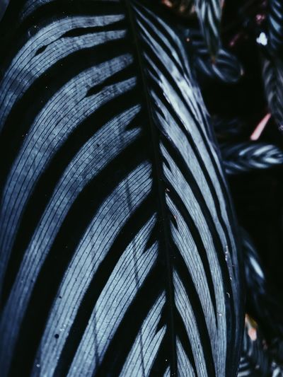 Close-up Focus On Foreground Pattern No People Still Life Indoors  Day Selective Focus Full Frame Abundance Nature Feather  High Angle View Blue Metal Leaf Striped Backgrounds Black Color