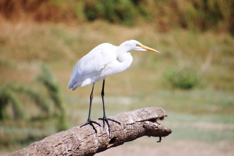 Estruary EyeEm Selects Bird Animal Wildlife Animals In The Wild Animal Themes Animal Vertebrate Beak