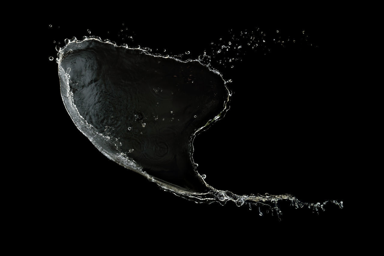 water, no people, studio shot, close-up, black background, sea, nature, indoors, drop, motion, one animal, copy space, splashing, animal, underwater, beauty in nature, animal themes, animals in the wild, marine