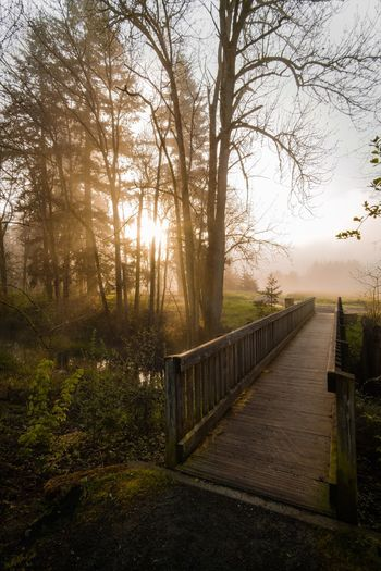 Foggy mornings Tree Railing Tranquil Scene Tranquility Fog Nature Outdoors Bare Tree No People The Way Forward Day Scenics Beauty In Nature Forest Footbridge Grass Sky