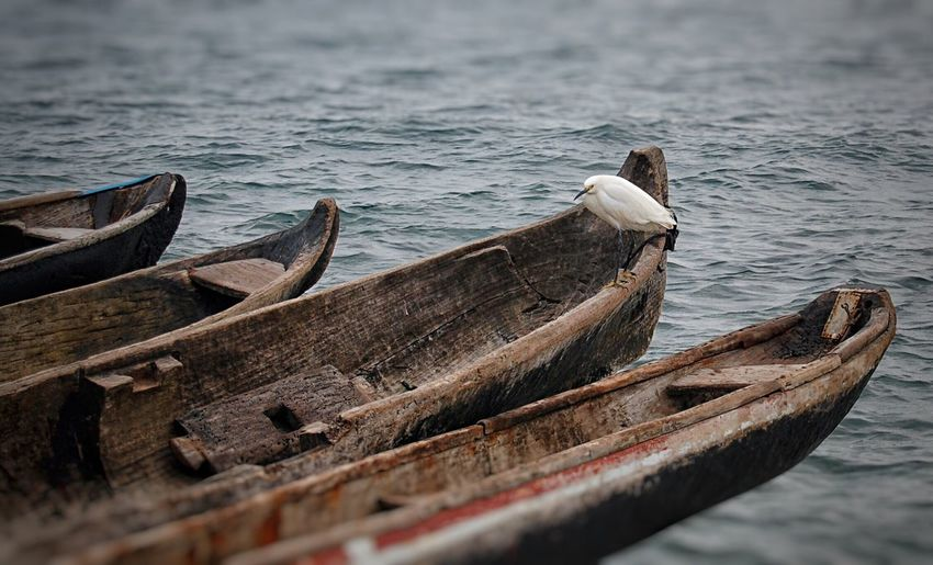 Bird Boat Birds Bird Photography Boats Panamá Wood Wood - Material Sea Seaside Seascape Sea View Indian EyeEm Best Edits Chris Mat Sea Life Sea_collection Boats And Water Ocean Ocean View EyeEm Best Shots - Nature EyeEm Nature Lover EyeEm Best Shots EyeEmBestPics Nature_collection