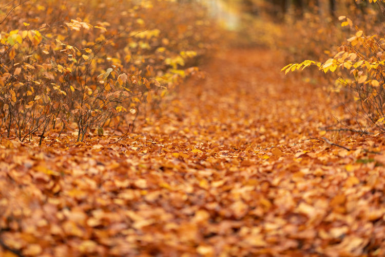 Autumn Plant Part Leaf Nature Orange Color Selective Focus Plant Yellow Land Sunlight Beauty In Nature No People Change Landscape Field Outdoors Tree Backgrounds Day Gold Colored Autumn Collection WoodLand Ornamental Garden
