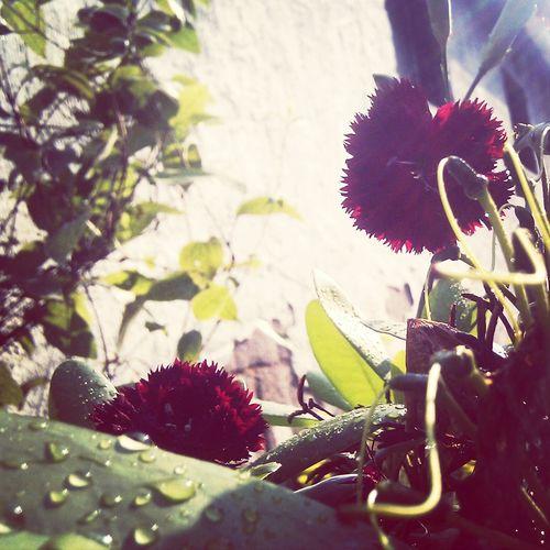 Oldi Blume 🌸
