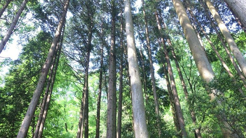 I Talk To The Trees By Chet Baker Kyoto Daimonjiyama Japan Japan Nature Trees Forest Japan Forest Daimonji Mountain Mountain Climbing Walking On The Mountain Green Wind