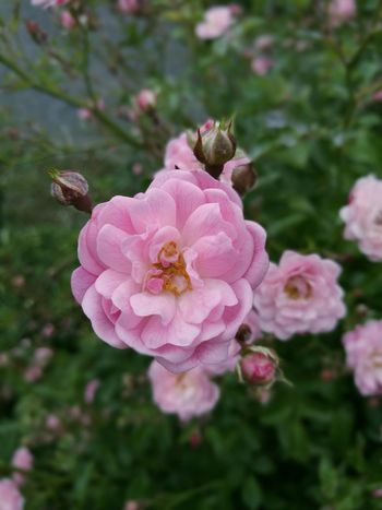Flower Spring Imnew Likeforlike #likemyphoto #qlikemyphotos #like4like #likemypic #likeback #ilikeback #10likes #50likes #100likes #20likes #likere Like Likeforlike Likeforfollow First Eyeem Photo