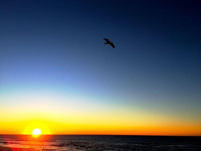 """Sunset Flight"" A solitary bird flies in the last light of the setting sun making its final decent into the Pacific Ocean along the Point Reyes National Seashore in California. Sunset Sunset_collection Sunset Silhouettes Bird Evening Light Pointreyes Pointreyesnationalseashore"