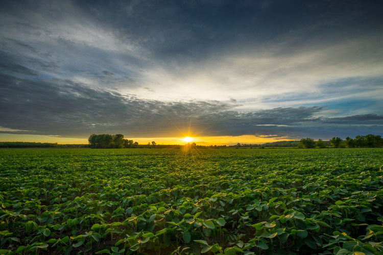 Agriculture Beauty In Nature Cloud - Sky Environment Field Growth Land Landscape Lens Flare Nature No People Outdoors Plant Rural Scene Scenics - Nature Sky Sun Sunbeam Sunlight Sunset Tranquil Scene Tranquility