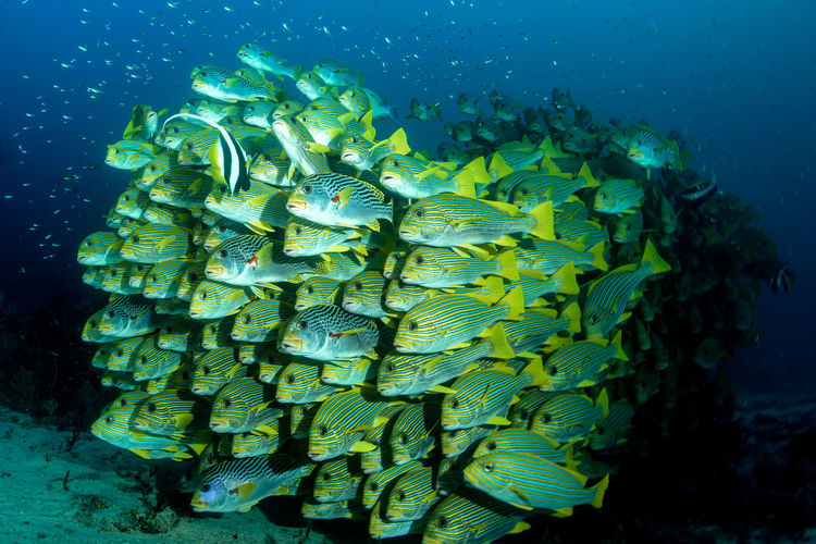 View of fish swimming in sea