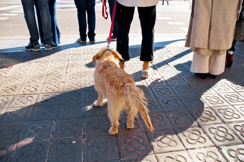 Low section of people with dog on street