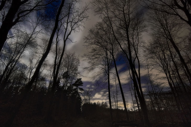 Stars behind clouds Dark EyeEm Nature Lover EyeEmNewHere Astronomy Astrophotography Beauty In Nature Cloud - Sky Forest Landscape Low Angle View Mystery Nature Night No People Outdoors Scenics Silence Sky Star - Space Stargazing Tranquil Scene Tranquility Tree