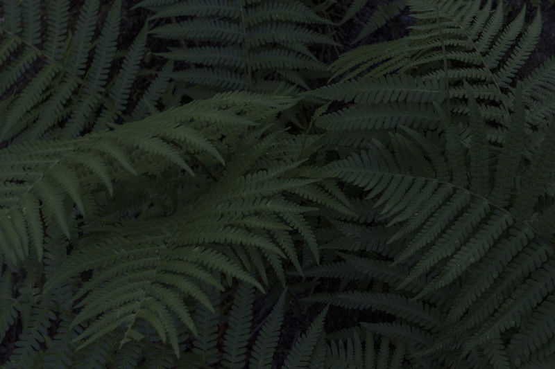 Full frame shot of fern