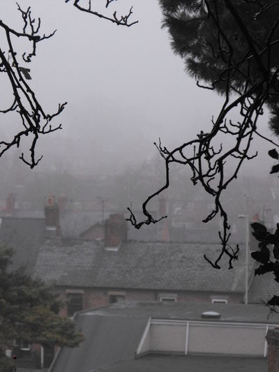 Oswestry is in fog Tree Plant Architecture Building Exterior Sky Nature Built Structure Branch No People Fog Bare Tree City Day Outdoors Wet Rain Window Building Winter Rainy Season Branches Oswestry Grey Wales UK Gloomy