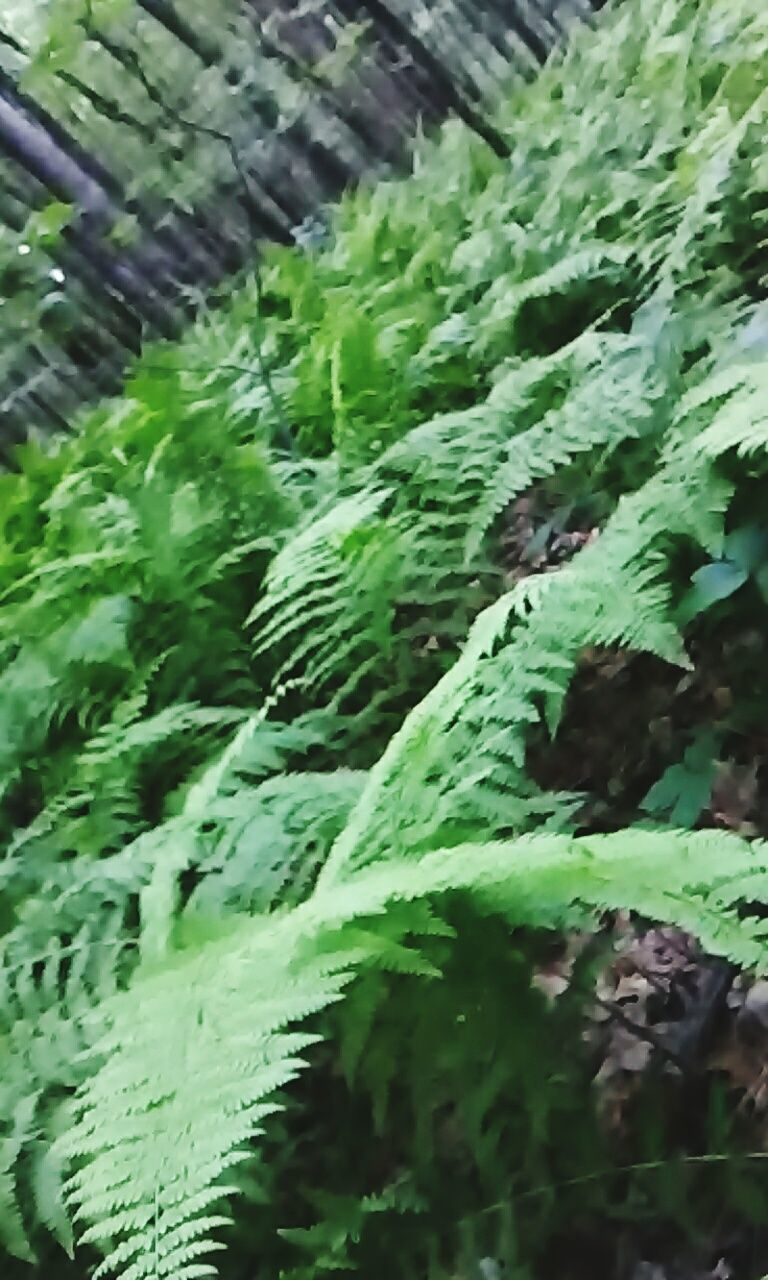 green color, plant, growth, day, no people, outdoors, nature, fern, close-up, water, architecture, beauty in nature, freshness