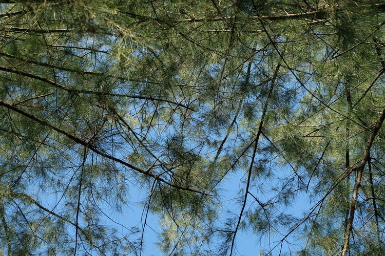 Tree Plant Low Angle View Tranquility No People Beauty In Nature Growth Sky Branch Nature Day Full Frame Forest Backgrounds Tree Canopy  Outdoors Land Scenics - Nature Non-urban Scene Tranquil Scene Directly Below